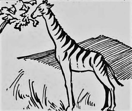 giraffe-derbyshire-times-12-november-1932