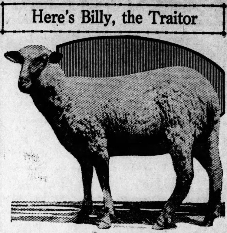 Judas sheep - The Missouri Herald (Hayti, Missouri) - 23 April 1926