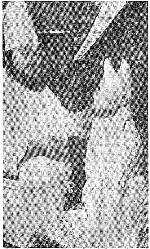 'enough to kill a brown dog' - The Canberra Times (Australian Capital Territory) - 20 May 1982