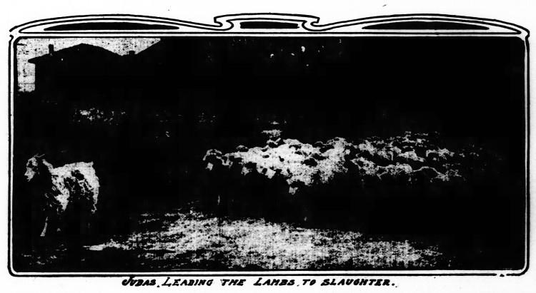 Judas Leading the Lambs to Slaughter - The St. Louis Republic (St. Louis, Missouri) - 2 April 1905