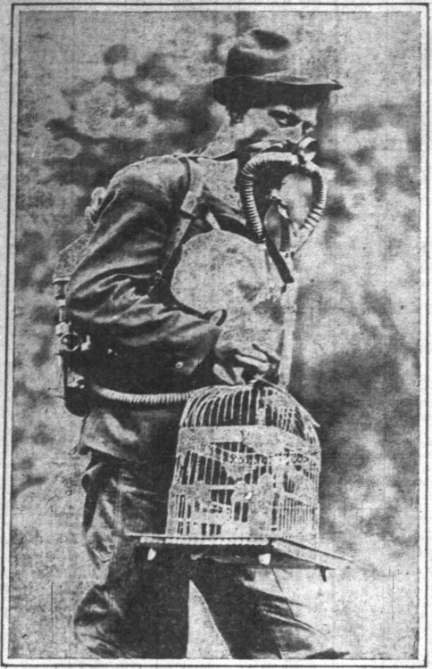 Government expert with oxygen mask and bird - Indianapolis News (Indiana) - 20 January 1912